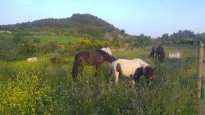 Yoga- Experiència Slow Life amb cavalls @ Can Gaudi | Sant Pere de Riudebitlles | Catalunya | España